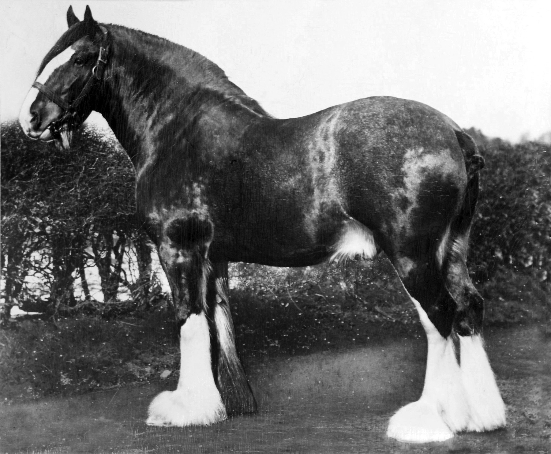 Highland Pony Society and Exmoor Pony Society …