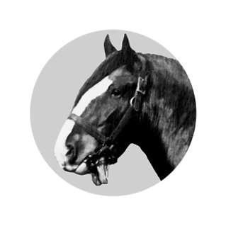 Clydesdale Horse Society